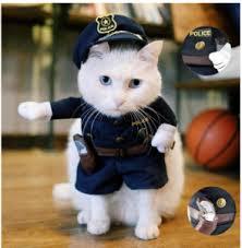 cute kittens in halloween costumes. Interesting Halloween Cat Halloween Costumes Policeman For Cute Kittens In Halloween Costumes