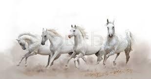 white horses running.  White Beautiful White Arabian Horses Running Over A Background  Stock  Photo Colourbox To White Horses Running Y