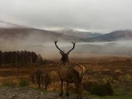 Whitetail Deer Antler Facts