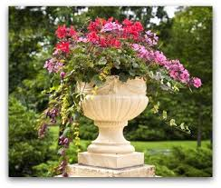 successful container gardening, garden urn with summer flowers