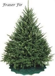 Tree VarietiesTypes Of Fir Christmas Trees