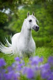 darmsanierung pferd anleitung