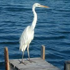 """a white heron essay a white heron"""" essay essaymania com"""