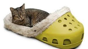 Image result for crocs sailing