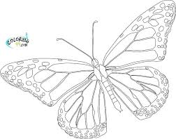 Free Butterfly Coloring Pages New Butterfly Coloring Pages Printable