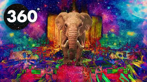 360 vr video psychedelic safari summer mind chill 360