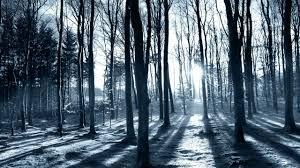 Sun shining through the trees HD desktop wallpaper Widescreen