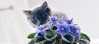 plants toxic to dogs plants toxic to cats
