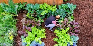 plant a cool season vegetable garden