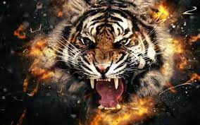 Tiger 3d Bild herunterladen - 3d 4k hd ...