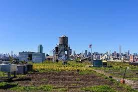 brooklyn grange an alternative rooftop