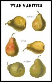 Pear Identification Chart Pear Varieties Pattern Chart Graph