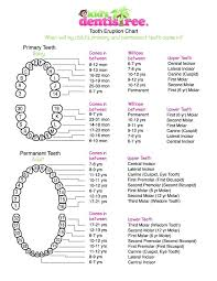 Teething Chart For Babies Complete Baby Teeth Growth Chart Template Primary Tooth Eruption