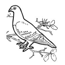 Small Picture 10 Cute Pigeon Coloring Pages For Your Little One