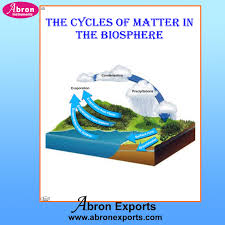 Chart Cycles Of Matter In The Biosphere Chart Cycles Of
