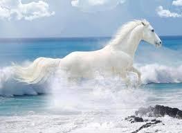 wild white horses running free. Wonderful Horses Wild White Horses Running Free  Photo19 On White Horses Running Free V