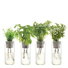 v1991.jpg  Modern Sprout Eco-Planter ...