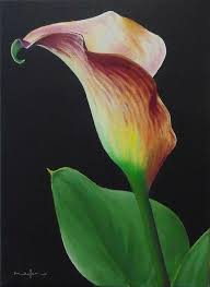 free art lesson how to paint a calla lily in oil art lessons
