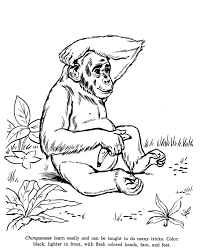 Small Picture Animal Drawings Coloring Pages Chimpanzees animal identification
