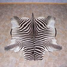 zebra rug taxidermy mount 10955 for the taxidermy