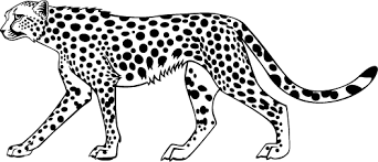 Cheetah Coloring Pages Funycoloring