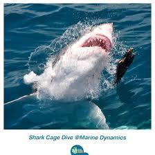 เปิดประสบการณ์ระทึกขวัญ!!! ดำน้ำดูฉลามขาวในกรง ที่แอฟริกาใต้  ใครใจกล้าต้องไปลอง!!