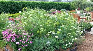 large image for excellent idea cut flower garden nice design the best flowers for your cutting