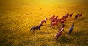 horses running in the sunset. Plain Horses Play Preview Video And Horses Running In The Sunset R