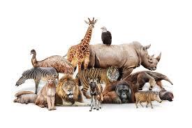 Imagini pentru mamifere