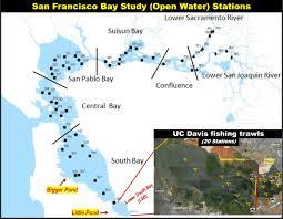 Fish In The Bay October 2019 Uc Davis Trawls Part2