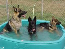 Πως αντιμετωπίζουμε σκύλο με θερμοπληξία;