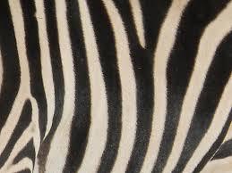 Zebra Patterns Enchanting Zebra Pattern By BustedLove On DeviantArt
