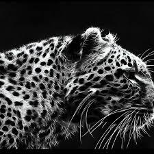 black and white cheetah backgrounds wallpaper wallpaper hd 1280x1280