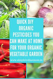 Organic Kitchen Garden 17 Best Ideas About Organic Vegetables On Pinterest Growing