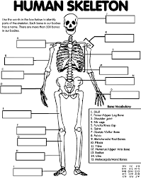 Small Picture Anatomy Coloring Pages Skull Apigramcom