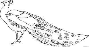Burung anggota keluarga ini dikenal karena bulu burung jantan pada banyak jenisnya, terutama bulu yang sangat memanjang dan rumit yang tumbuh dari paruh, sayap atau kepalanya. 23 Gambar Burung Cendrawasih Hitam Putih