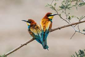 März wird einer der kandidaten zum vogel des jahres gekürt. Vogel Des Jahres 2021 Offentliche Wahl Nabu