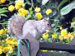 keep squirrels out of garden jpg