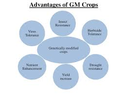 genetically modified crops and food security scientific facts genetically modified