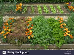 Plants For Kitchen Garden Raised Bed Plots Kitchen Garden With Companion Plants To Deter