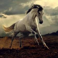 horses running in the wind.  Running In This Article You Will Find Free Wild Horses When I Saw Horses  Freedom And Power Come To Mind Giant Powerful Horses Running In The Meadows To Horses Running The Wind