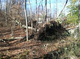 Image result for meme of downed trees