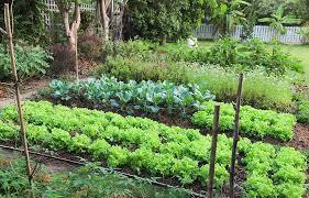21 507 best backyard vegetable garden