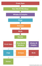 Animal Iq Chart Hierarchy Of Animal Intelligence Hierarchy Structure