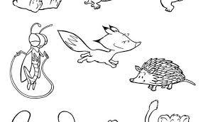 Disegno Di Piccoli Animali Da Colorare Disegni Da Colorare E Con