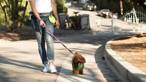 walking journal wag the on demand dog walking service is expanding to phoenix