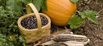 Image result for three sisters corn beans squash