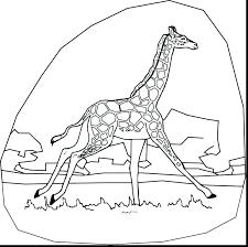 Giraffe Printable Template Giraffe Template Giraffe Outline Template Printable Elephant