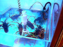 Lobster Vending Machine Cool Sub Marine Catcher Japanese Live Lobster Claw Machine YouTube