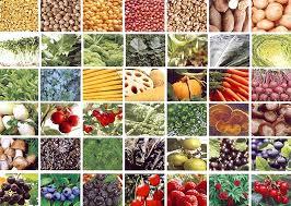 Organic Raw Food Nutrition